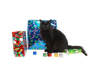Cat with presents for Holiday giving back to animal rescues