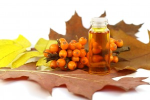 Berries of sea-buckthorn berries and medical oil