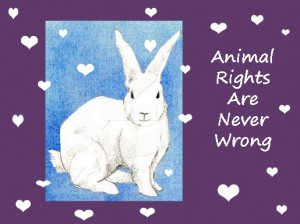 sevani animal rights bunny