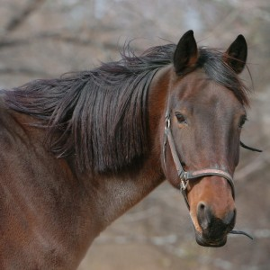 brown horse named Freedom who lives at the Catskills Animal Sanctuary