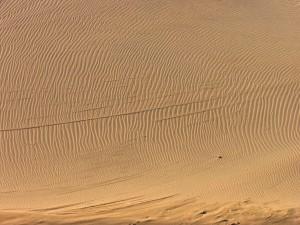 dry desert sand